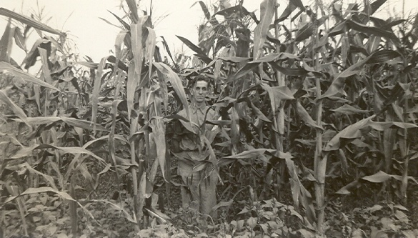 man_in_corn