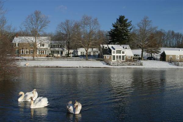 swans house